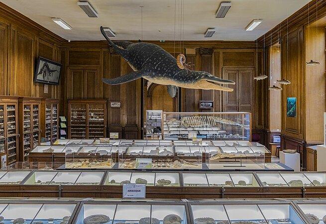 La galerie de paléontologie - Muséum des Sciences Naturelles