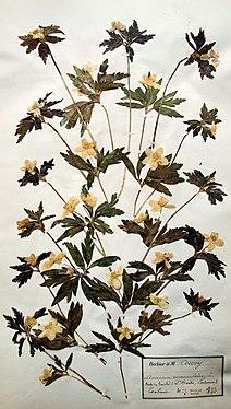 Les collections végétales - Muséum des Sciences Naturelles