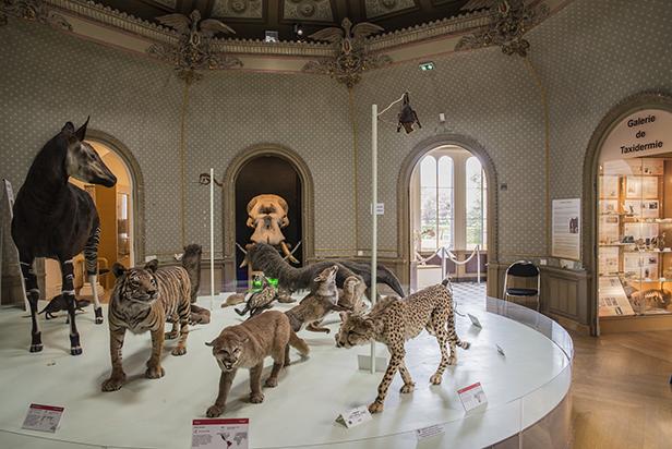 La galerie de zoologie - Muséum des Sciences Naturelles
