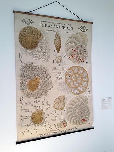 Foraminifères, L'océan à la loupe